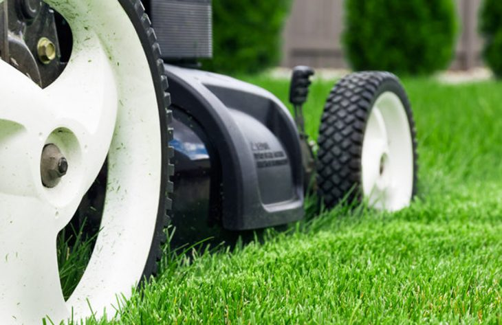 Dauerhaft grüner Rasen