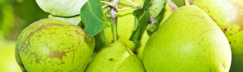Wirkungsvolle Maßnahmen für eine reiche Ernte