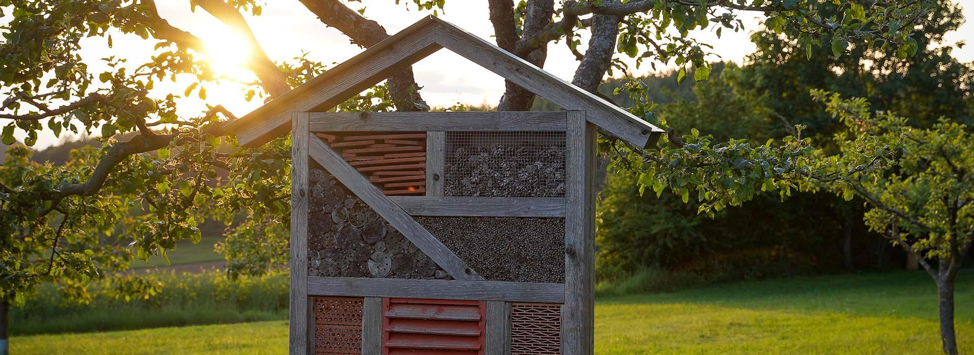 Insektenhotel aufstellen – aber wo?