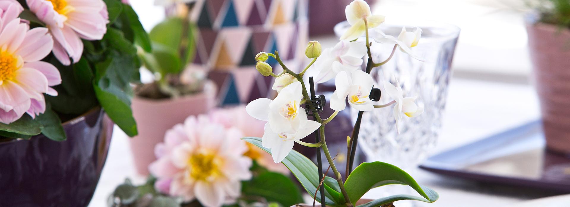 Orchidee: Farbtupfer zum Wohlfühlen