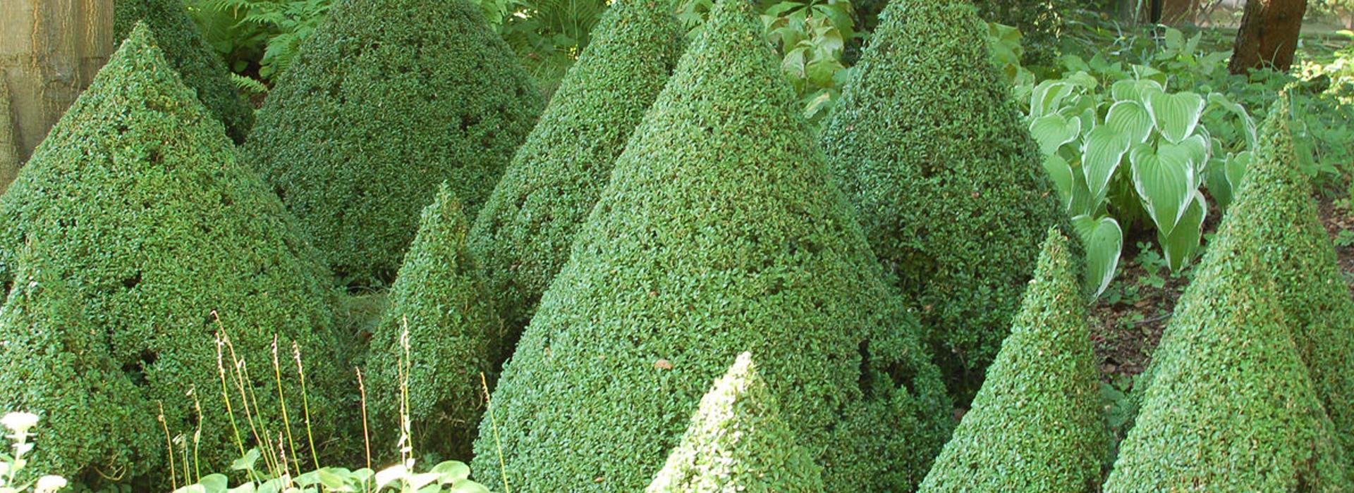 Schnittverträgliche Pflanzen