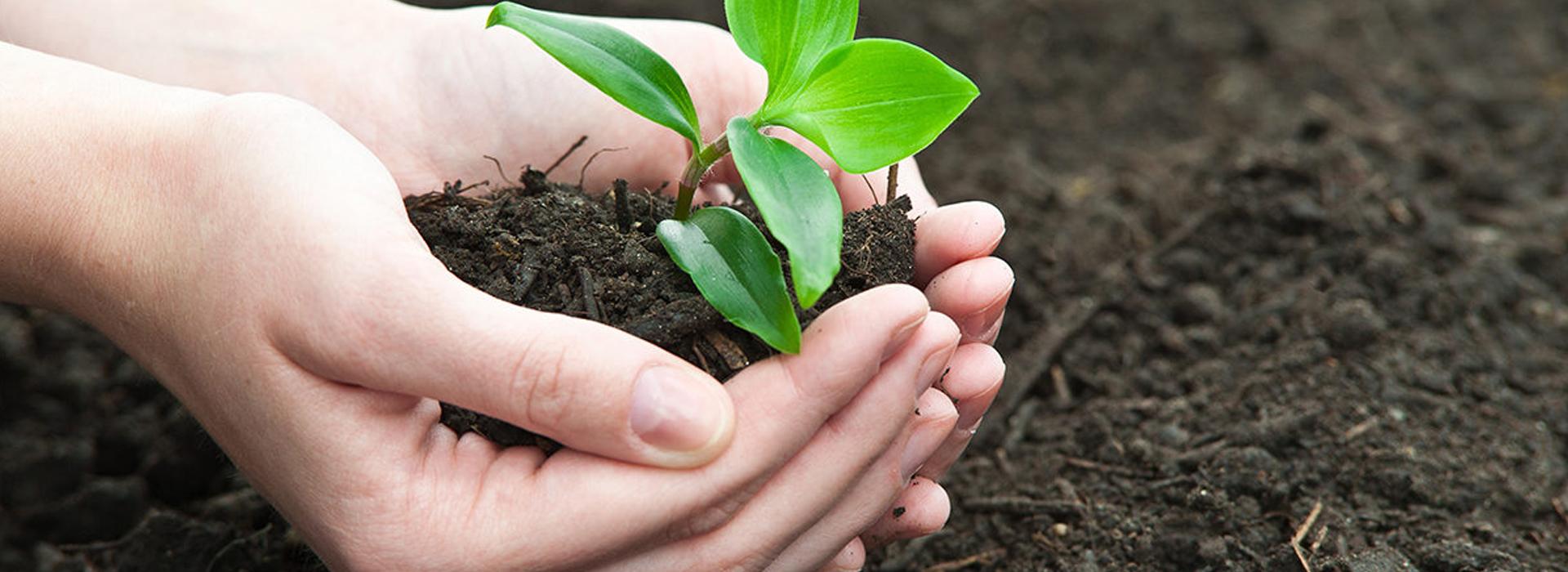 Wie vermehre ich Gemüsepflanzen und Kräuter?