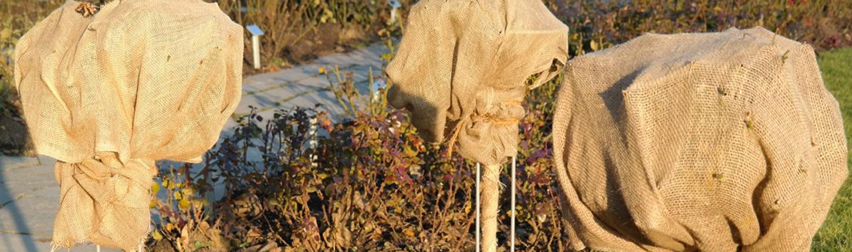Winterschutz für Pflanzen – so geht´s!